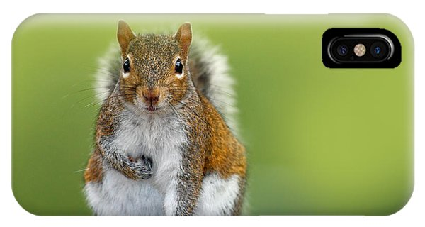 Grey Background iPhone Case - Funny Image From Wild Nature. Gray by Ondrej Prosicky