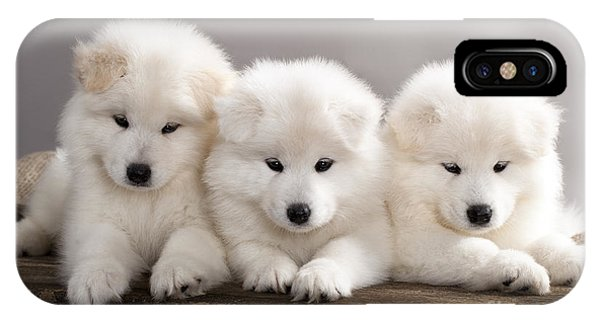 Background iPhone Case - Funny Puppies Of Samoyed Dog Or Bjelkier by Liliya Kulianionak