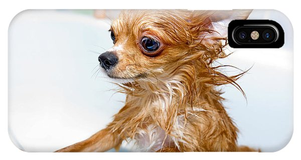 Small Dog iPhone Case - Funny Wet Chihuahua Dog In Bathroom by Art Nick