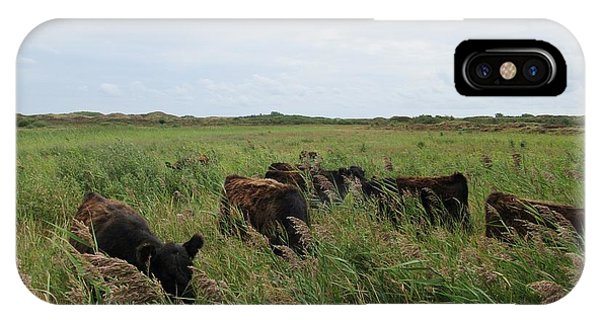 Galloway Cows On Texel North Holland IPhone Case