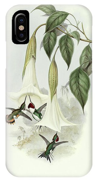 Humming Bird iPhone Case - Galothorax Mulsanti by John Gould