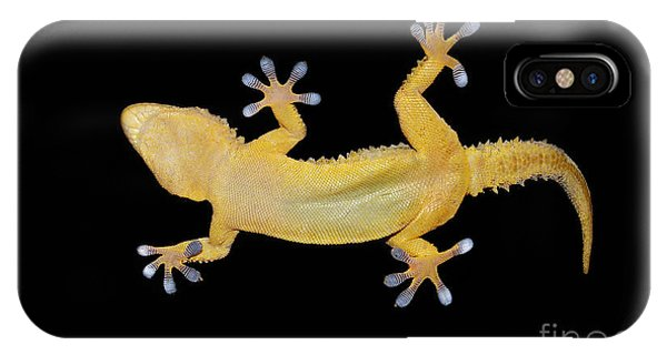 Zoology iPhone Case - Gecko Lizard On Clear Glass by Nico99