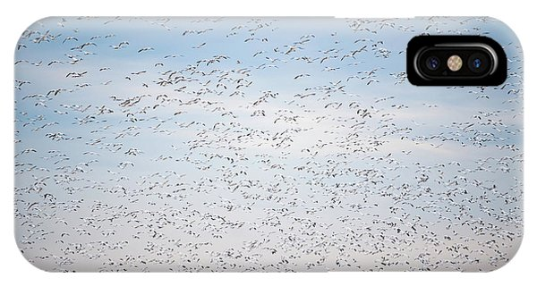 Geese In The Flyway IPhone Case