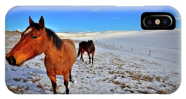 IPhone Case featuring the photograph Geldings In The Snow by David Patterson