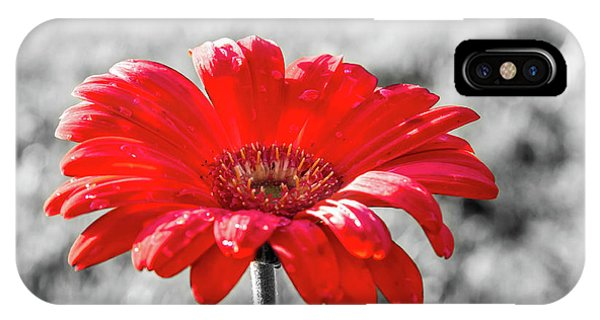 Gerbera Daisy Color Splash IPhone Case