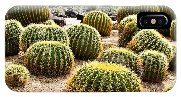 Botanical Garden iPhone Case - Giant Cactus In Garden, Thailand by Doraclub