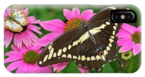 Giant Swallowtail Papilo Cresphontes IPhone Case