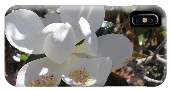 Gigantic White Magnolia Blossoms Blowing In The Wind IPhone Case