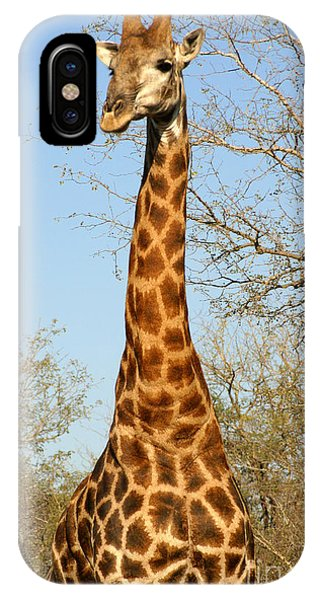 Giraffe Standing In The Trees Kruger Phone Case by Paul Banton