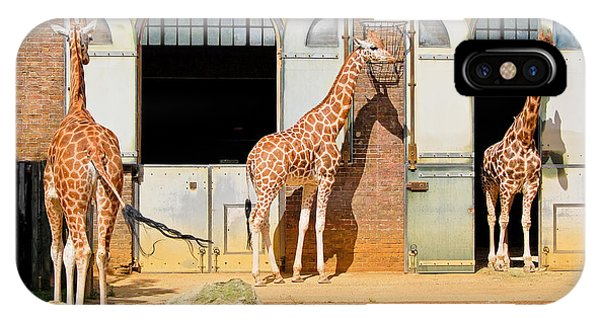 Zoology iPhone Case - Giraffes At The London Zoo In Regent by Kamira