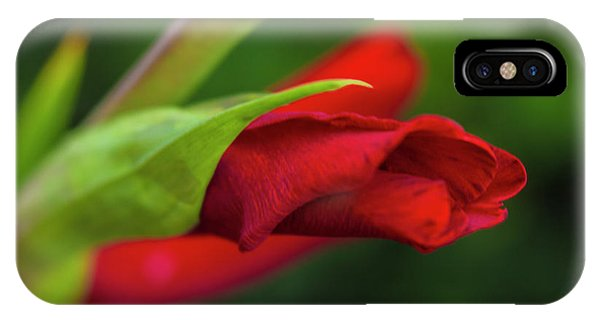 Gladiolus IPhone Case