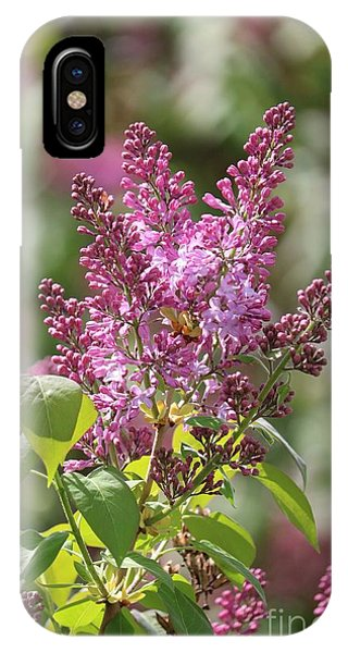 iPhone Case - Glorious Lilacs by Carol Groenen