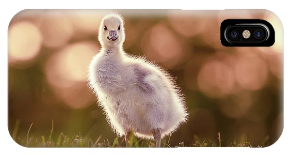 Goslings iPhone Case - Glosling - The Glowing Gosling by Roeselien Raimond