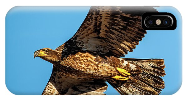 IPhone Case featuring the photograph Golden Eagle II by Jeff Phillippi