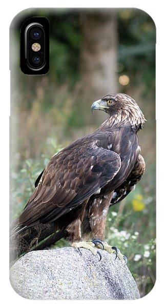 Golden Eagle On Rock 92515 IPhone Case