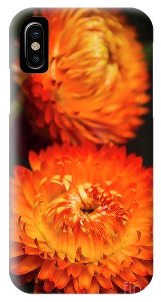 Golden Gardens iPhone Case - Golden Everlasting by Jorgo Photography - Wall Art Gallery