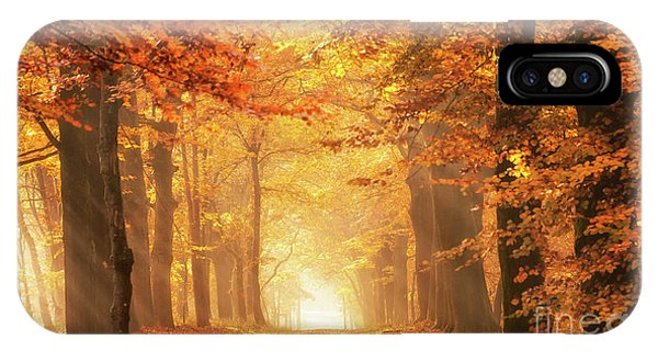 IPhone Case featuring the photograph Golden Forest In Fall Season by IPics Photography