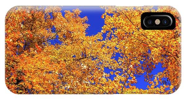 Golden Oaks IPhone Case