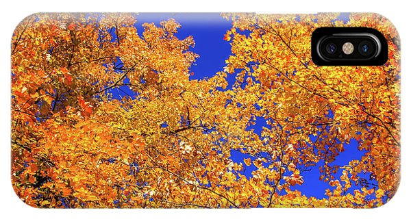 Golden Oaks IPhone Case