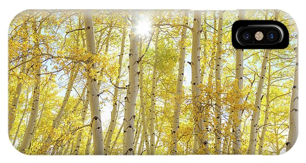 IPhone Case featuring the photograph Golden Sunshine On An Autumn Day by James BO Insogna