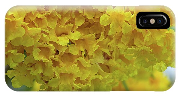 IPhone Case featuring the photograph Golden Tree, Golden Trumpet Tree Or Tallow Pui Dthn0255 by Gerry Gantt