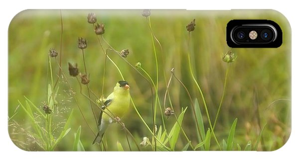Goldfinch In Summer IPhone Case