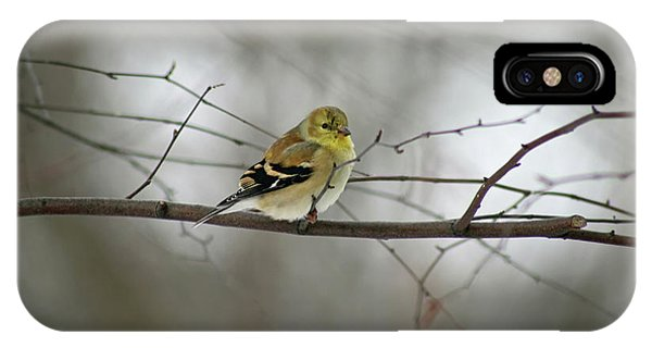 Goldfinch In Winter Looking At You IPhone Case