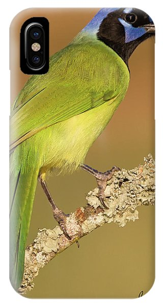 Gorgeous Green Jay IPhone Case