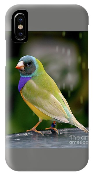 IPhone Case featuring the photograph Gouldian Finch? #2 by PJ Boylan