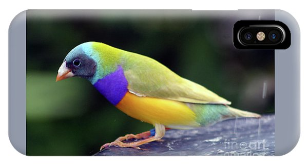 IPhone Case featuring the photograph Gouldian Finch?  by PJ Boylan