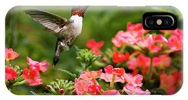 Humming Bird iPhone Case - Graceful Garden Jewel by Christina Rollo