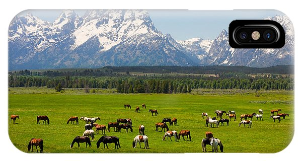 Alpine Meadows iPhone Case - Grand Teton National Park by Andrew Zarivny