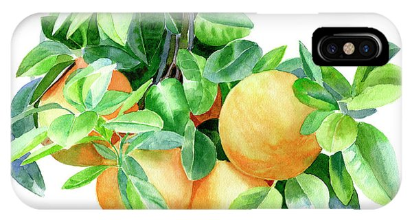 Grapefruit iPhone Case - Grapefruit by Sharon Freeman
