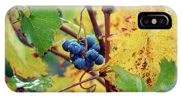 IPhone Case featuring the photograph Grapes In Tuscany by Mark Duehmig