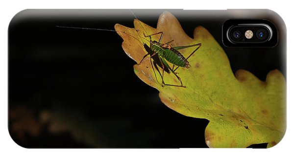 Grasshopper IPhone Case