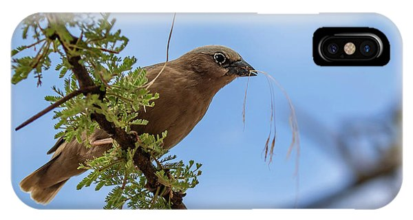 IPhone Case featuring the photograph Gray-headed Social Weaver by Thomas Kallmeyer