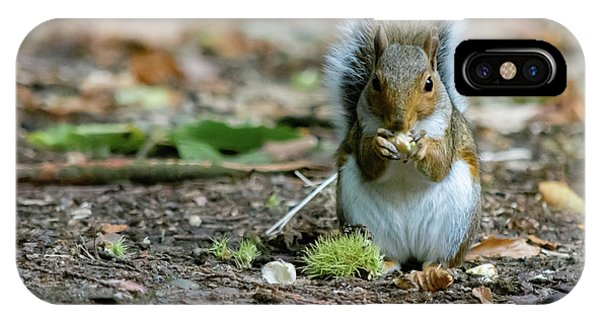 IPhone Case featuring the photograph Gray Squirrel Stood Upright Eating A Nut by Scott Lyons
