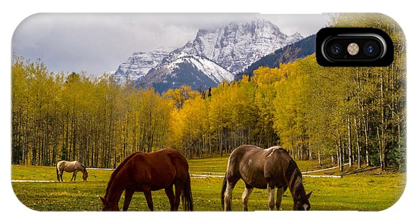 Grazing In Aspen IPhone Case