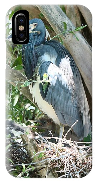 iPhone Case - Great Blue Heron On Nest With Baby by Carol Groenen