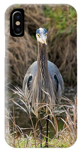 Great Blue Heron Portrait IPhone Case