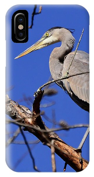 Great Blue Heron Strikes A Pose IPhone Case