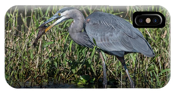 Great Blue Heron With Fish IPhone Case
