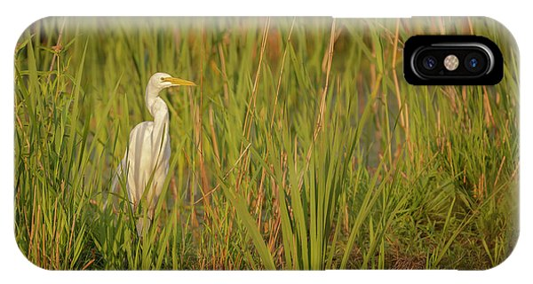 Horicon Marsh iPhone Case - Great Egret 2019-1 by Thomas Young