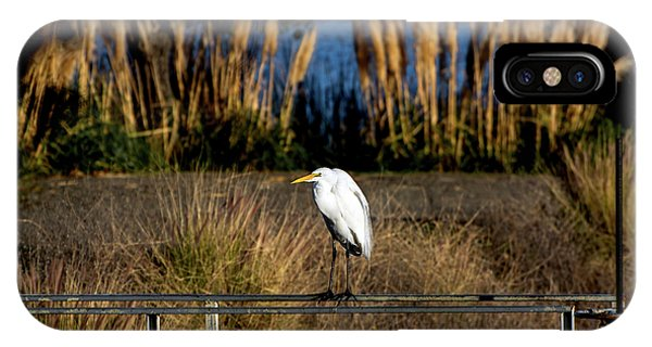 Great Egret Posing By Golden Pampas Grass IPhone Case
