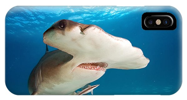 Bahamas iPhone Case - Great Hammerhead by Frantisekhojdysz