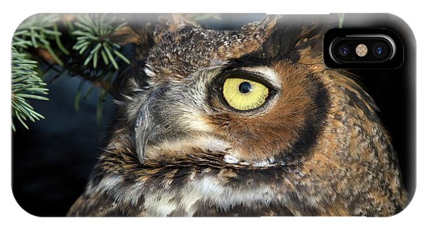 Great Horned Owl 10181801 IPhone Case