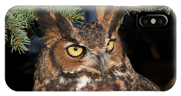 Great Horned Owl 10181802 IPhone Case