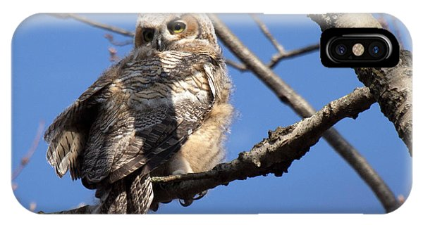 Great Horned Owlet 42915 IPhone Case