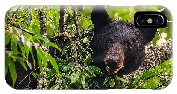 Great Smoky Mountains Bear - Black Bear IPhone Case