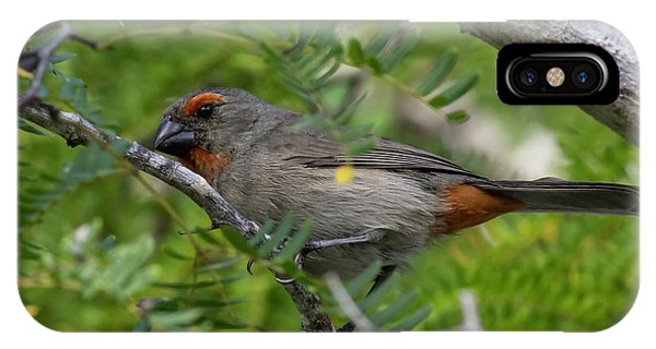 Greater Antillean Bullfinch IPhone Case